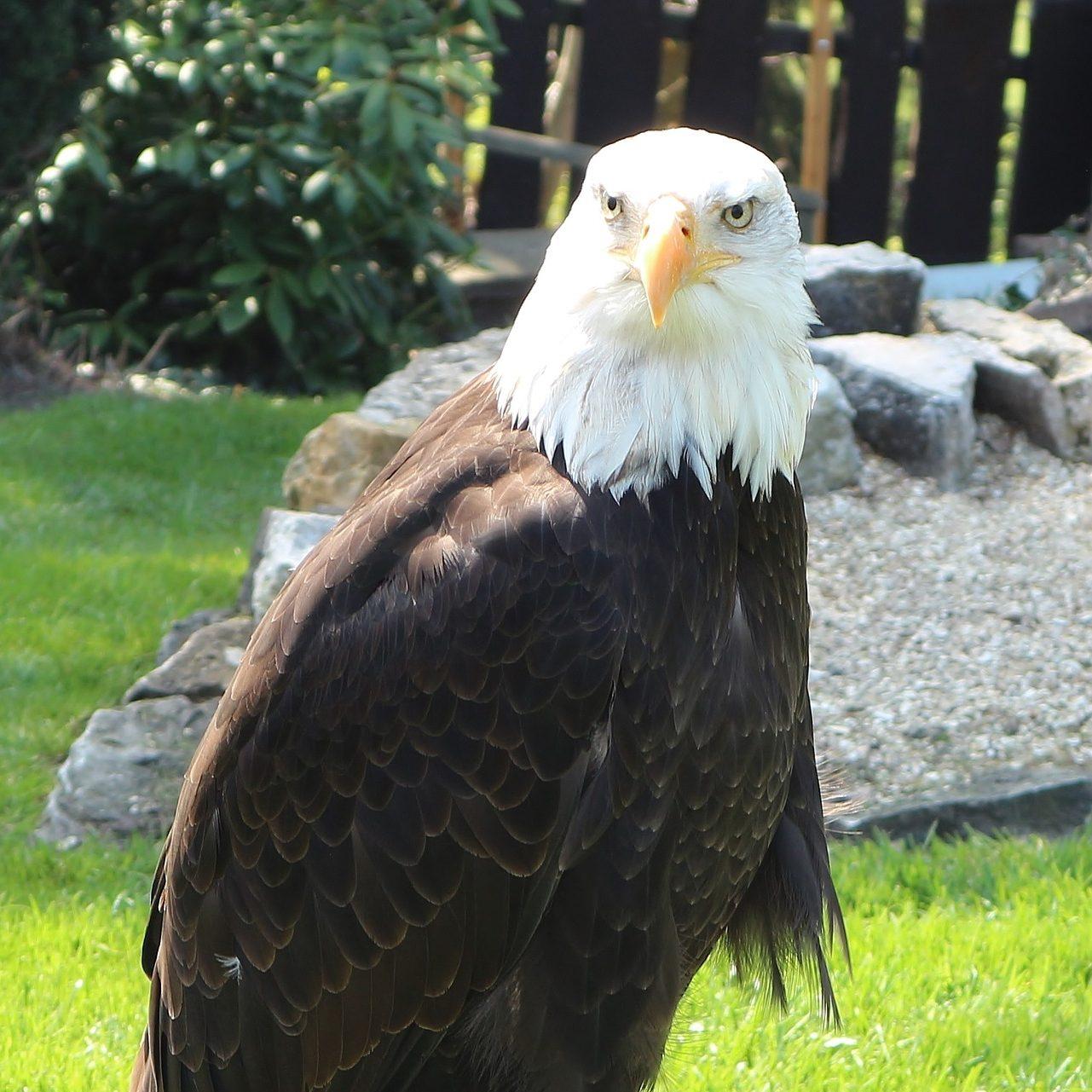 Die Adlerwarte in Berlebeck entdecken